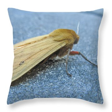 Fokker Moth Throw Pillow