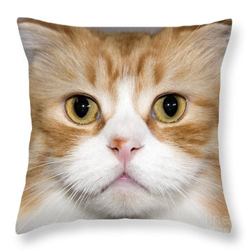 Folded Ear Cat Throw Pillow