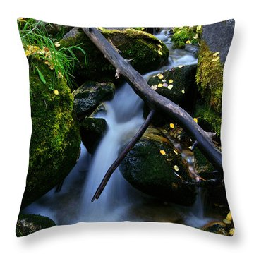 Throw Pillow featuring the photograph Follow Me by Jeremy Rhoades