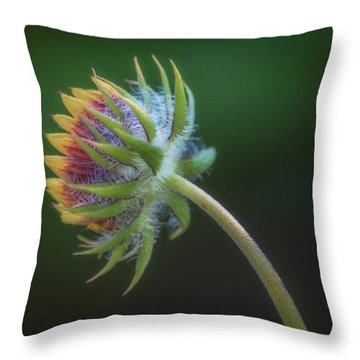 Following The Light Throw Pillow
