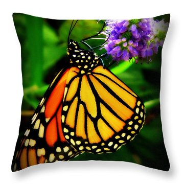 Food For Flight Throw Pillow by Lainie Wrightson