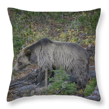 Throw Pillow featuring the photograph Foraging Grizzly Bear by Gary Hall