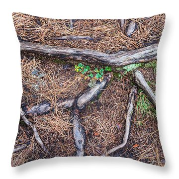Forest Floor With Tree Roots Throw Pillow by Matthias Hauser