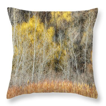 Forest In Late Fall At Scarborough Bluffs Throw Pillow by Elena Elisseeva