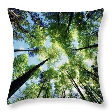 Forest Throw Pillow by Selke Boris