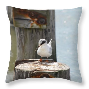 Forster's Tern Throw Pillow