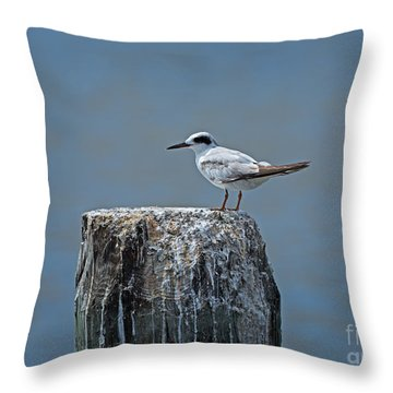 Forster's Tern Throw Pillow by Louise Heusinkveld