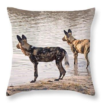 Throw Pillow featuring the photograph Four Alert African Wild Dogs by Liz Leyden