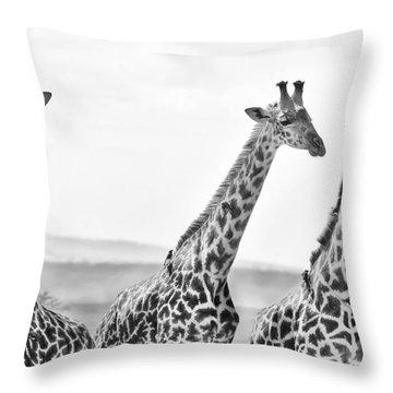 Four Giraffes Throw Pillow by Adam Romanowicz