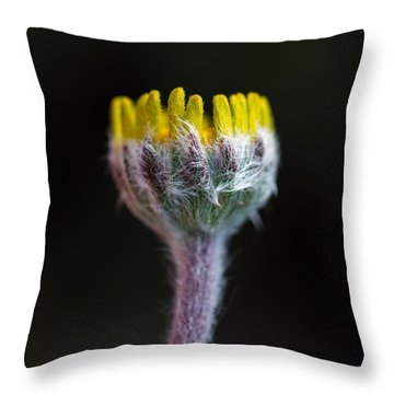 Four-nerve Daisy Bud Beginning To Open Throw Pillow