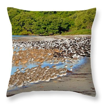 Four Species Of Birds At Roost On Tampa Bay Beach Throw Pillow by Jeff at JSJ Photography