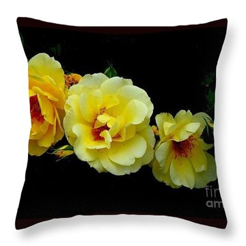 Throw Pillow featuring the photograph Four Stages Of Bloom Of A Yellow Rose by Janette Boyd