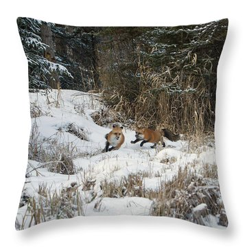 Fox Hollow Throw Pillow by Jack Bell