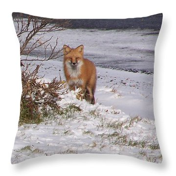 Fox In My Yard Throw Pillow