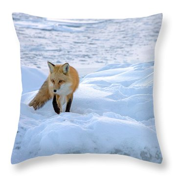 Fox Of The North II Throw Pillow by Mary Amerman