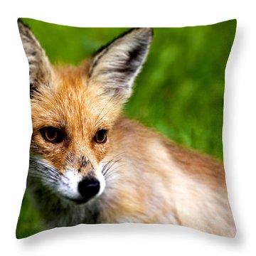 Fox Pup Throw Pillow by Fabrizio Troiani