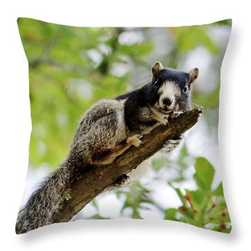 Fox Squirrel Throw Pillow by Cynthia Guinn