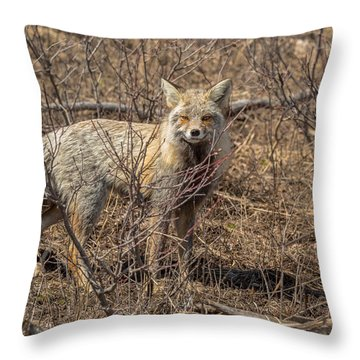 Throw Pillow featuring the photograph Foxy In Disguise by Yeates Photography