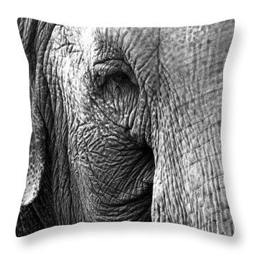 Fragility  To Forget  Throw Pillow by Jerry Cordeiro