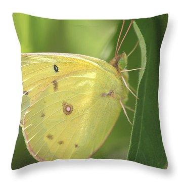 Throw Pillow featuring the photograph Frail Beauty by The Art Of Marilyn Ridoutt-Greene