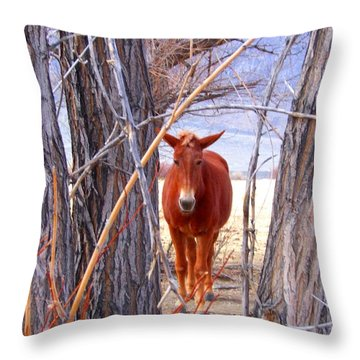 Throw Pillow featuring the photograph Framed by Marilyn Diaz