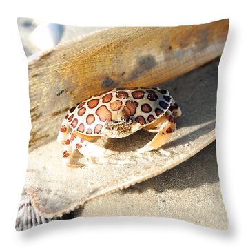 Frank The Spotted Crab Of Anna Maria Throw Pillow by Margie Amberge
