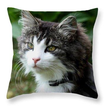 Throw Pillow featuring the photograph Frankie by Susanne Baumann