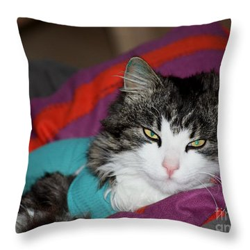 Throw Pillow featuring the photograph Frankie With T-shirt by Susanne Baumann