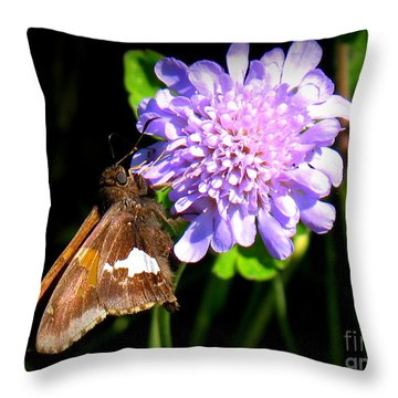 Silver Spotted Skipper Throw Pillow by Patti Whitten