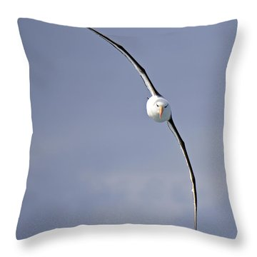 Free To Follow Throw Pillow by Tony Beck