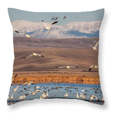 Throw Pillow featuring the photograph Freeze Out Lake Morning by Jack Bell