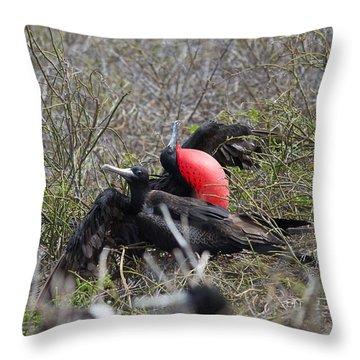 Frigate Mating Dance Throw Pillow