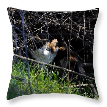 Frightened Feral Calico  Throw Pillow by Susan Wiedmann