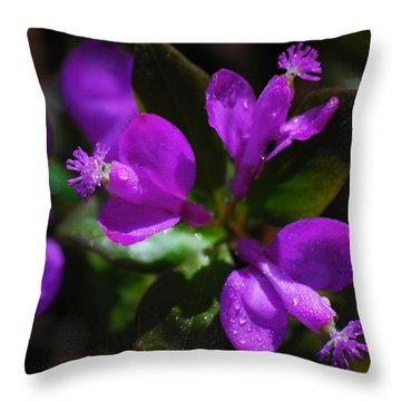 Fringed Polygala Throw Pillow by Christina Rollo