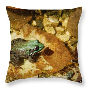 Throw Pillow featuring the photograph Frog And A Ladybug by Janice Adomeit