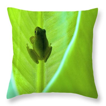 Throw Pillow featuring the photograph Frog In Blankie by Faith Williams