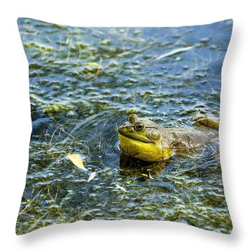 Frog Song Throw Pillow