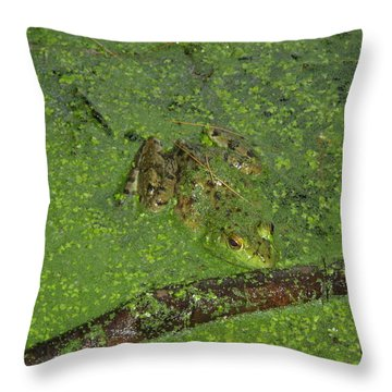 Throw Pillow featuring the photograph Froggie by Robert Nickologianis