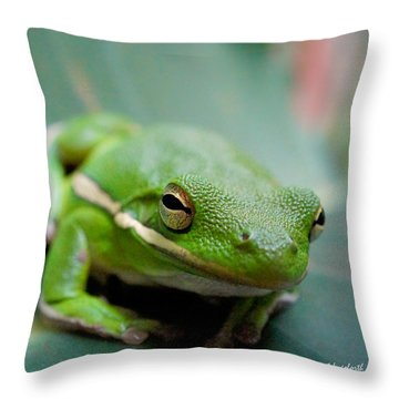 Froggy Smile Squared Throw Pillow by TK Goforth