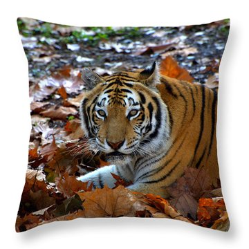 Frolicking In The Leaves Throw Pillow by Jodi Terracina