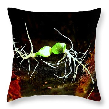 Frolicking Sprouts Throw Pillow by Shirley Sirois