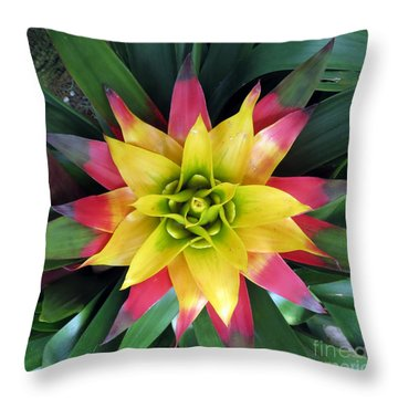 From The Top Down Throw Pillow by Darleen Stry