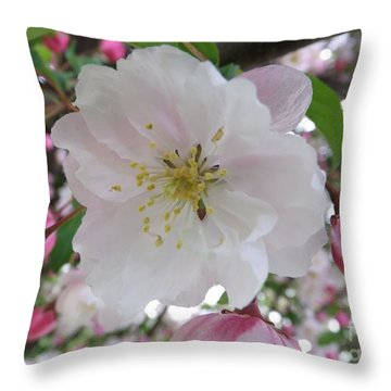 Front And Center Throw Pillow by Sara  Raber