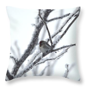 Throw Pillow featuring the photograph Frosted Branches by Dacia Doroff
