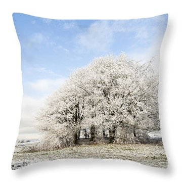 Frosted Copse Throw Pillow by Anne Gilbert