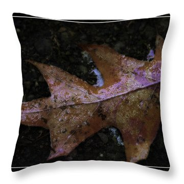 Throw Pillow featuring the photograph Frosted Oak by Tikvah's Hope