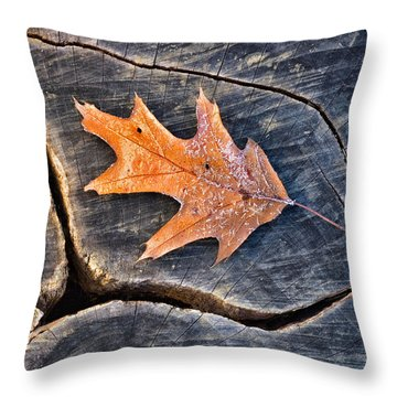 Frosty Leaf On Tree Trunk Throw Pillow by Gary Slawsky