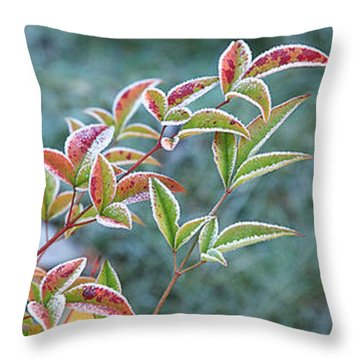 Frosty Leaves Throw Pillow by Gill Billington