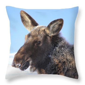 Frosty Moose Throw Pillow by Marty Fancy