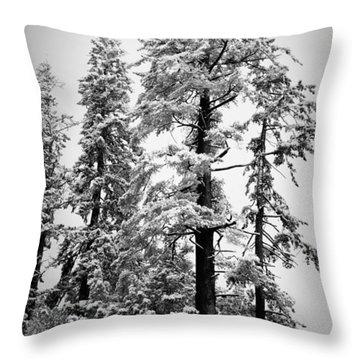 Frozen Beauty Throw Pillow by Betty Depee